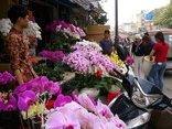 Tiêu dùng & Dư luận - Người Việt 'bạo tay' chi 18 triệu USD nhập hoa, cây cảnh chơi Tết