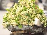 Dân sinh - Chùm ảnh: Mùa hoa bưởi ngập tràn sắc xuân Hà Nội