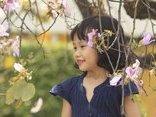 Dân sinh - Ngất ngây với hoa ban nở rộ giữa lòng Hà Nội