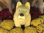 Cộng đồng mạng - Xuất hiện chú chó biểu cảm kỳ lạ tại đường hoa thành phố Mỹ Tho