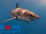 Đầu tư - Công ty của 'cá mập' Vương hợp tác với Gỗ Trường Thành