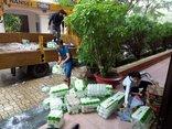 Tin nhanh - Bà Rịa - Vũng Tàu: Hoãn họp, cho học sinh nghỉ, không họp chợ đến hết bão