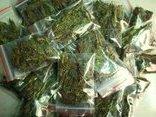 An ninh - Hình sự - Vũng Tàu: Phát hiện một người nước ngoài trồng cây cần sa trong nhà