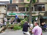Xã hội - Hà Nội: Cây xanh đổ giữa trưa, đè bẹp 1 ô tô và 3 xe máy