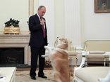 Tiêu điểm - Tiết lộ bí mật thú vị về những chú chó của Tổng thống Nga Putin