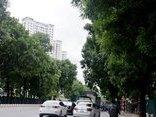 Xã hội - Chùm ảnh: Hàng cây xanh đường Phạm Văn Đồng trước ngày 'khai tử'