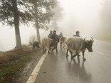 Xã hội - Rét đậm kinh hoàng, hàng ngàn trâu, bò chết vì đói và rét