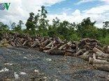 Cuộc sống xanh - Tình trạng phá rừng ở Đắk Lắk diễn biến phức tạp