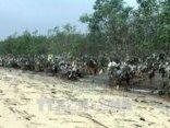 Điểm nóng - Rác 'bức tử' rừng ngập mặn nguyên sinh ven đê sông Lam