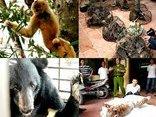 Kết nối- Chính sách - Tàng trữ động vật hoang dã trái phép có thể bị phạt tù đến 15 năm