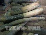Điểm nóng - Vận chuyển ngà voi từ Hà Nội đi Thái Lan bằng đường hàng không