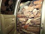Điểm nóng - Quảng Trị: Xe bán tải nhiều biển số giả chở gần 2 tấn gỗ trắc lậu