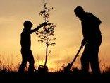 Đa chiều -  Rễ, thân cành và lá