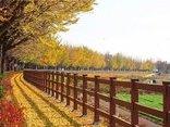Cần biết - Du lịch mùa thu cùng Transviet Travel