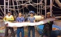 Mới- nóng - Xôn xao clip dân bắt được cá hố khủng dài gần 4m, nặng 80kg