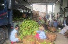 Dân sinh - Độc đáo chợ bắp lớn nhất Sài thành
