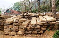 An ninh - Hình sự - Cận cảnh 139m3 gỗ sa mu quý hiếm bị lâm tặc đốn hạ ở Nghệ An