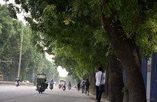 Xã hội - Cận cảnh chặt hạ, di dời cây xanh trên đường Phạm Văn Đồng