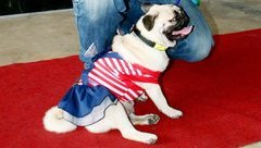 Xã hội - Độc đáo hội thi chó đẹp tại miền Tây