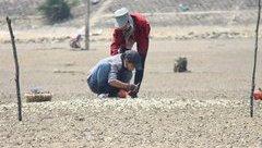 Môi trường - Bất ngờ với  'thủ phạm' khiến ngao, sò chết trắng tại Hà Tĩnh