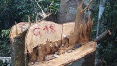 """Điểm nóng - Nghệ An: """"Cần có nghị quyết cấm phá rừng""""?"""
