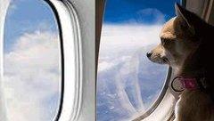 Cộng đồng mạng - Sáng cười: Tại vì chó con chưa cai sữa