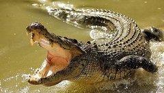 Tin nhanh - Nghi kênh nước có cá sấu khổng lồ, chính quyền cảnh báo người dân