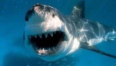 Tin nhanh - Hải Phòng: Cấp cứu ngư dân bị cá mập cắn đứt tay