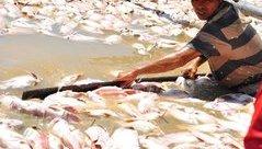 Môi trường - Nguyên nhân khiến hơn 1.500 tấn cá bè chết trên sông La Ngà
