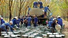 Chính trị - Điều chỉnh cơ cấu cổ phần Công ty mẹ - Tập đoàn Công nghiệp Cao su Việt Nam