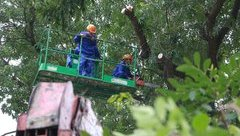 Mới- nóng - Clip: Chặt hạ, di chuyển cây xanh trên đường Phạm Văn Đồng