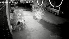 Mới- nóng - Clip: Hai thanh niên đánh ô tô đi... nhổ trộm hoa hồng