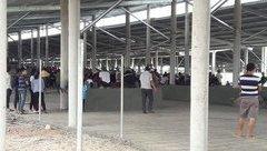 Môi trường - Vụ dân đưa ruồi chết biểu tình: Xử phạt doanh nghiệp 70 triệu đồng