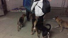 """Gia đình -  Chuyện về những  """"hiệp sĩ"""" cứu hộ chó tại Hà Nội"""