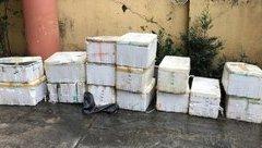 Tin nhanh - Buôn cá ong không rõ nguồn gốc, chủ hàng bị phạt 17 triệu đồng