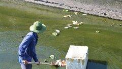 Môi trường - Quảng Nam: Dân lo lắng trước tình trạng cá chết hàng loạt tại hồ Nguyễn Du
