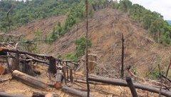 Điểm nóng - Quảng Nam: Chủ tịch xã mất chức vì ... rừng