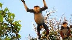 Môi trường - Đà Nẵng: Yêu cầu cán bộ không nhận quà biếu có nguồn gốc động vật hoang dã