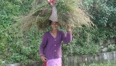 Cuộc sống số - Nông nghiệp biến đổi gene thất thế trước canh tác hữu cơ ở Ấn Độ