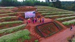 Xã hội - Chiêm ngưỡng đồi hoa tam giác mạch đẹp mê hồn ở Nghệ An từ Flycam