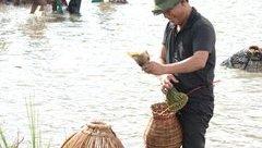 Tin nhanh - Hàng nghìn người lao xuống đầm trong ngày hội bắt cá lớn nhất nước
