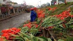 Xã hội - Xót xa, hoa tươi roi rói, nông dân vứt thành đống