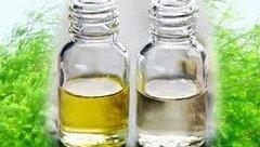 Sức khỏe - Dầu tràm bán tràn lan chỉ có 20-30% là tinh dầu nguyên chất
