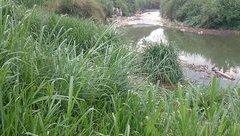 Tin nhanh - Lâm Đồng: Dùng điện chích cá dưới suối, hai người tử vong