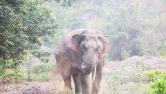 Chính trị - Xã hội - Xuất hiện đàn voi mới ở rừng Thanh Sơn