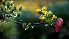 Tin nhanh - Thời tiết mùng 4 Tết: Bắc Bộ mưa nhỏ vài nơi