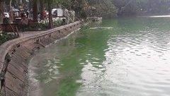 Tin nhanh - Diệt tảo lam ở Hồ Gươm bằng phương pháp thủ công