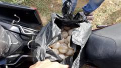 Hồ sơ điều tra - Tuyên án bị cáo vận chuyển 116 quả trứng vích