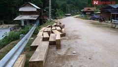Môi trường - Nghệ An: Gỗ lậu nằm la liệt trên đường, chủ rừng có vô can?