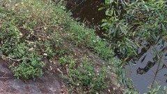 Tin nhanh - Huế: Bàng hoàng phát hiện thi thể 2 nam thanh niên dưới mương nước
